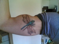 free dragonfly tattoo picture